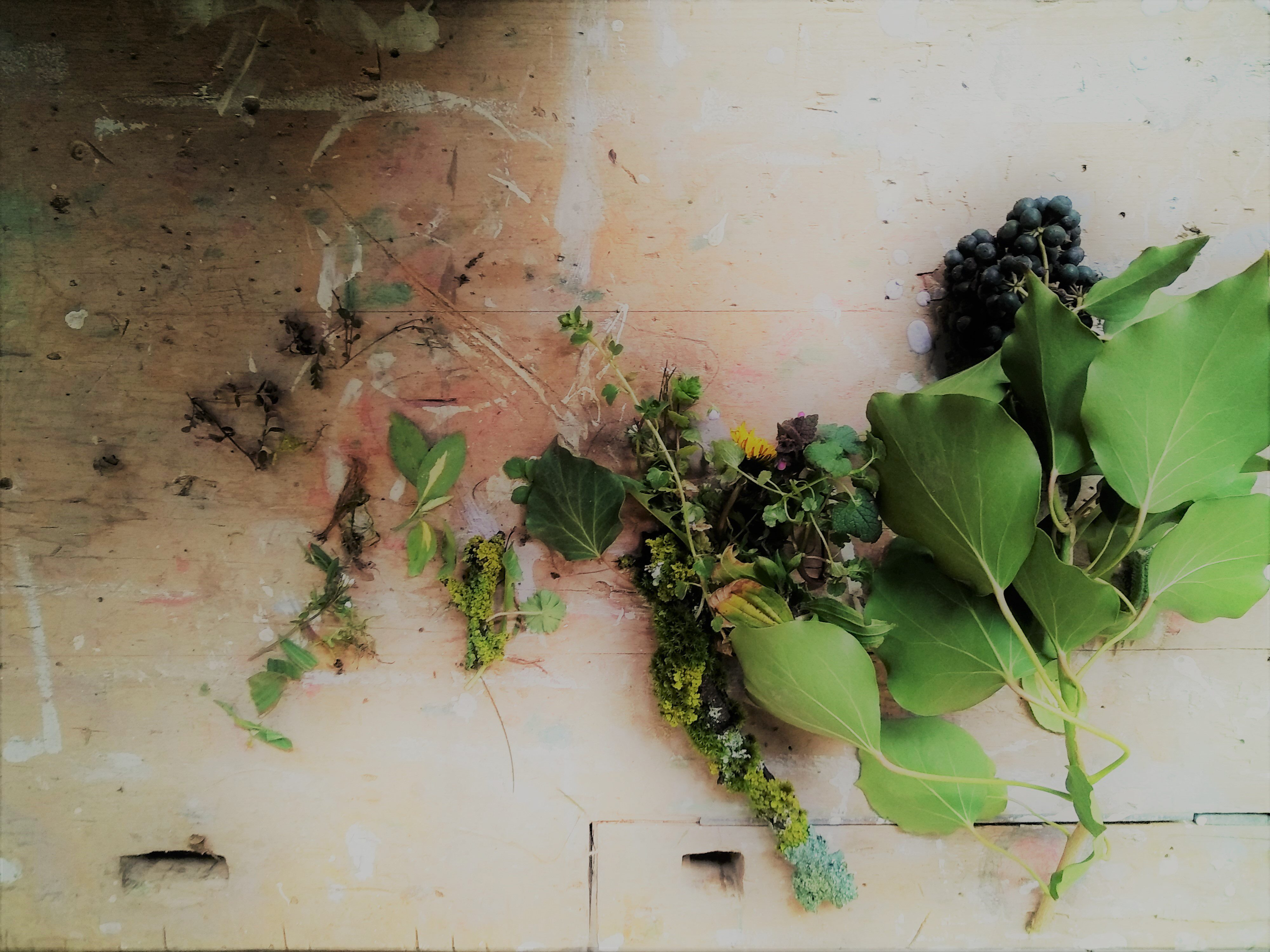 Nature spontané (ou biodiversité)